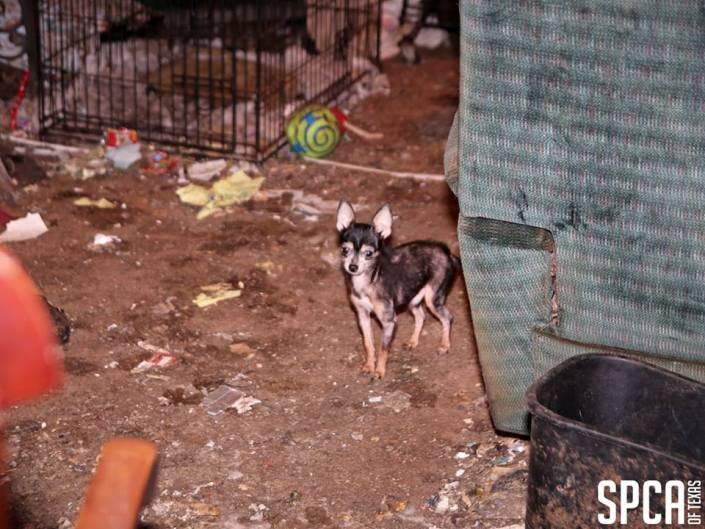 dog and puppies found in freezer