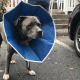 Dog injured in vicious machete attack