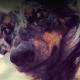 Dog killed in off leash encounter