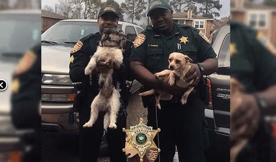 Dogs in cruel social media post found