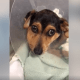 Family brought puppy to veterinarian to be euthanized