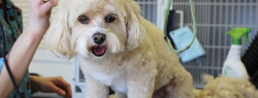 Groomer accused of strangling pets