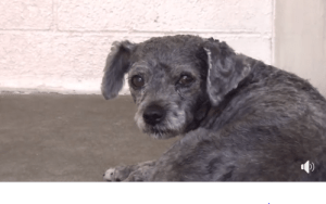 Homeless dog is overwhelmed at busy shelter