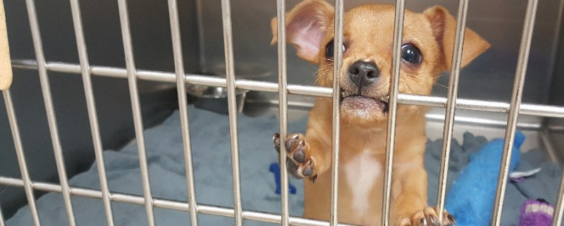 Puppy still jailed after possible bat exposure
