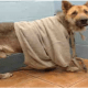 Neglected dog in dismal condition