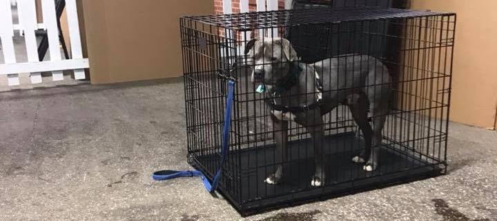 No one wanted to adopt one dog at adoption event