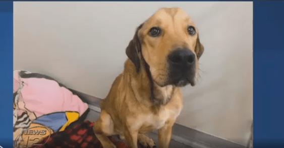 nurse starved dog