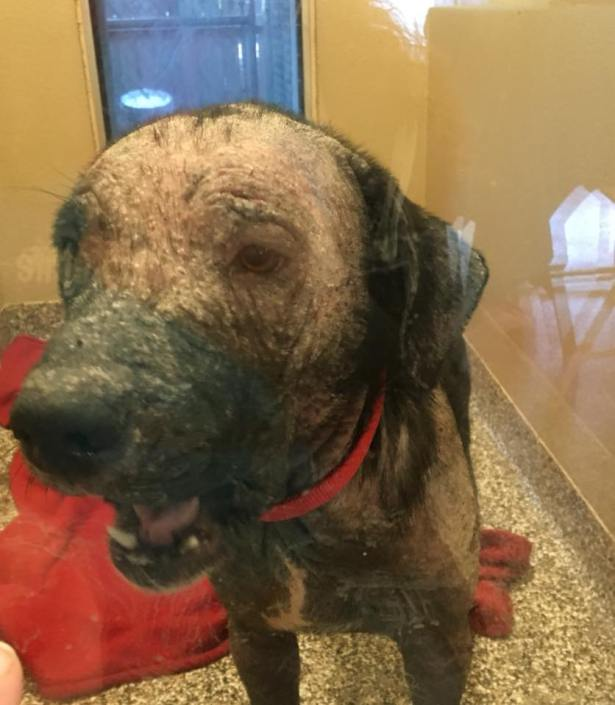 Owner wants neglected stray back