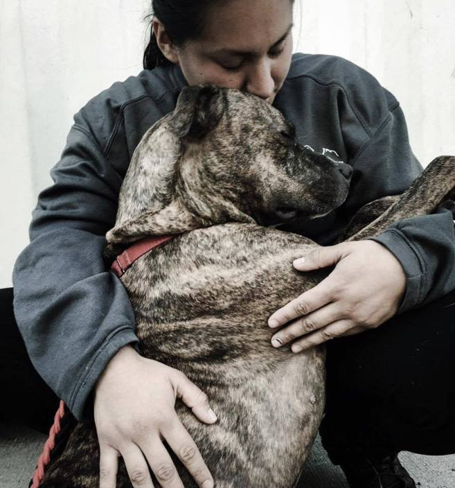 Physically abused dog returned 11 times