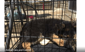 Puppy died inside of cage left in the sun