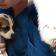Puppy with severed paw found