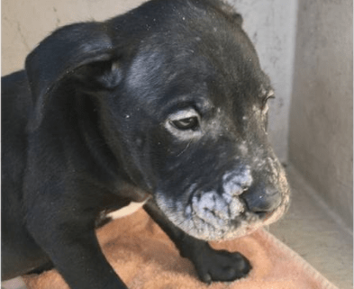 Puppy wrapped in plastic bag thrown in dumpster