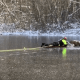 Rescuers save deer from icy pond