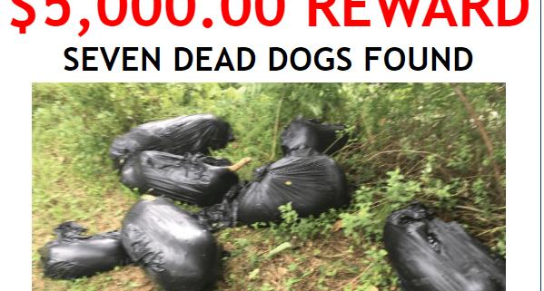 Dead dogs dumped