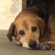 Sad senior surrendered by busy family