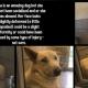 Scared homeless dog