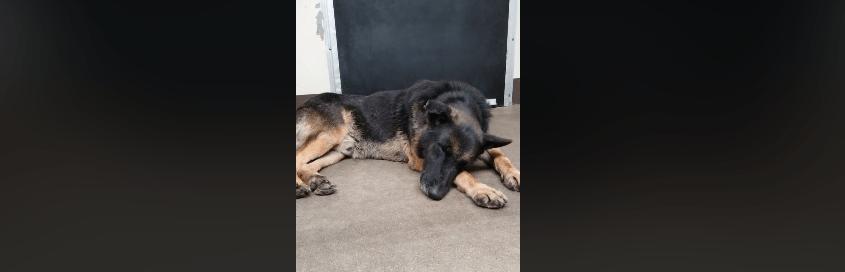Senior shepherd resigned to fate