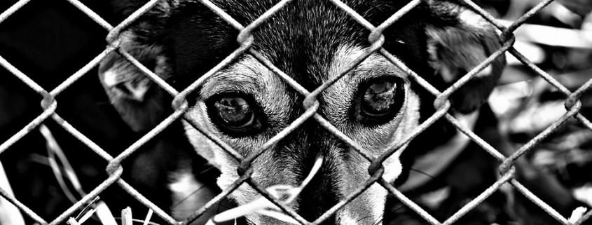Shelter plea regarding euthanasia