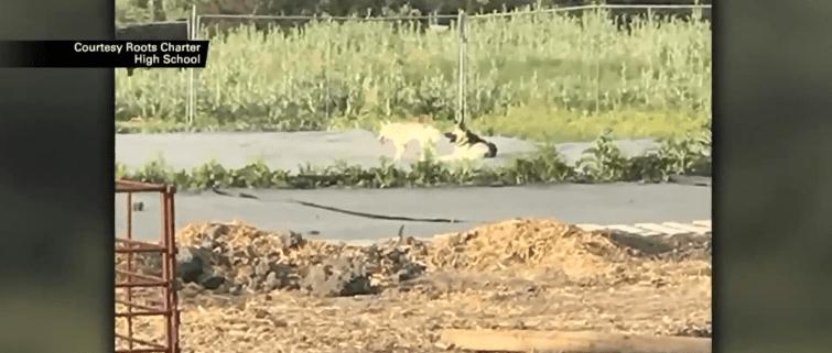 Shepherd killed for attacking livestock