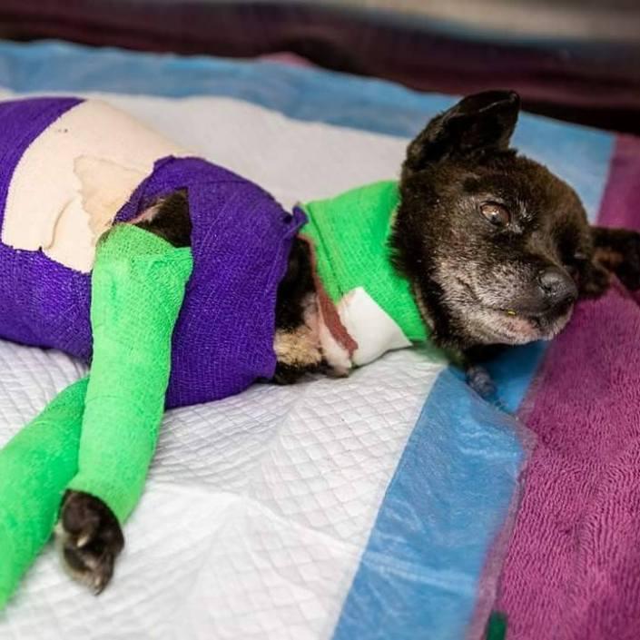 Tragic update about dog purposefully set on fire