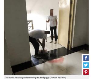 University staff beat puppy to death in dorm