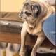 Woman sentenced for abandoning elderly dog