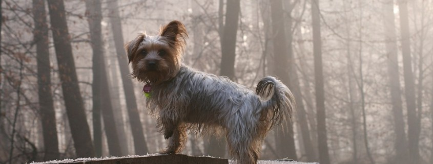 Woman - heart broke after death of her dog