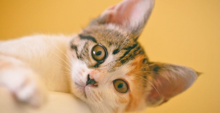 How Often Should A Cat Be Bathed? Know the Reasons