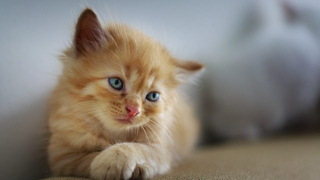 Here Is A Quick Cure For WHEN DO KITTENS START POOPING?