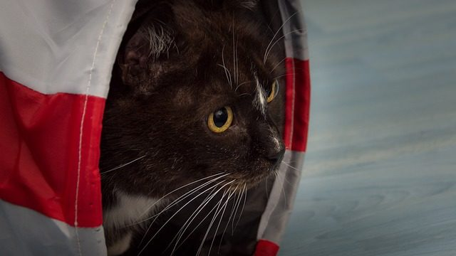 Best Cat Tunnel [Review & Guide]
