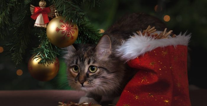 The Best Cat Christmas Costumes