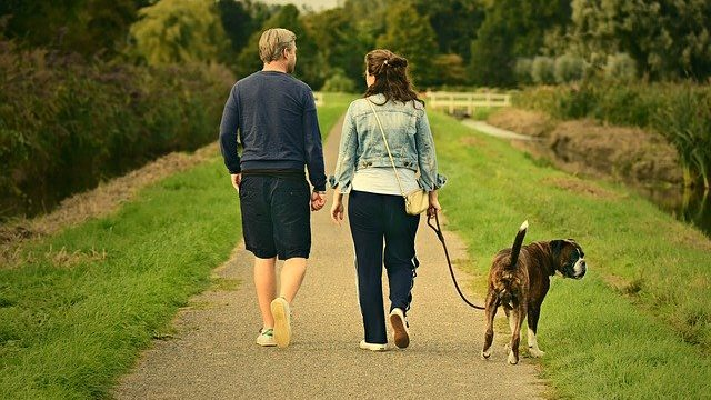 Is a Trained Family Protection Dog Worth the Investment