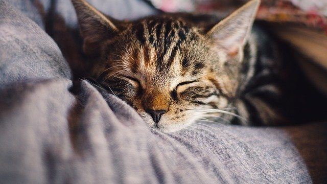 Why does my cat sleep all day? The real reason