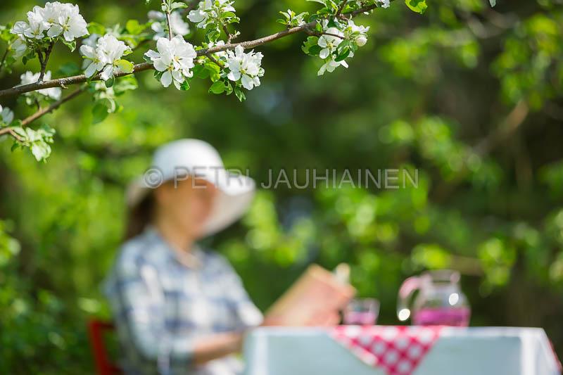 Nainen lukee kirjaa puutarhassa omenapuiden kukkiessa