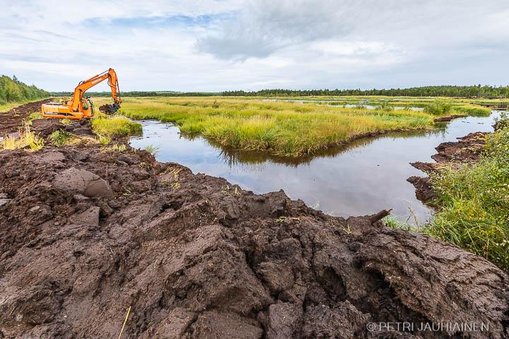Pohjoismainen kosteikkopäivä World Wetlands Day Sotkakosteikko