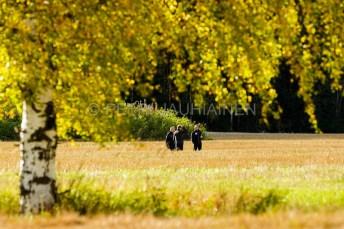 petri-jauhiainen_valokuvaaja_valokuvaus_kuopio_pohjois-savo_fotographer_fotography_vehmersalmi-kuopio_120926-5
