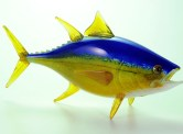Yellow Fin Tuna Hand Blown Glass Artist: Hopko