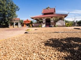 Sušení buráků u kláštera ve vesnici Tad Lo