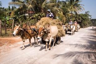 Hodně tradiční dopravní prostředek, na venkově stále k vidění.