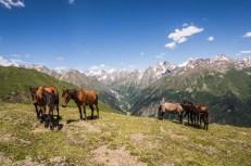 Koně ke Kavkazu patří