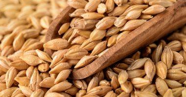 Photo of مؤسسة الحبوب السعودية تشترى 1.02 مليون طن من الشعير فى مناقصة