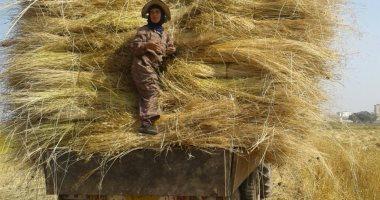 بدء استلام أولى شحنات نبات الكتان من المزارعين بشركة طنطا