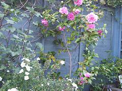 Garden1_1
