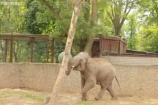 Słonie ZOO (2)