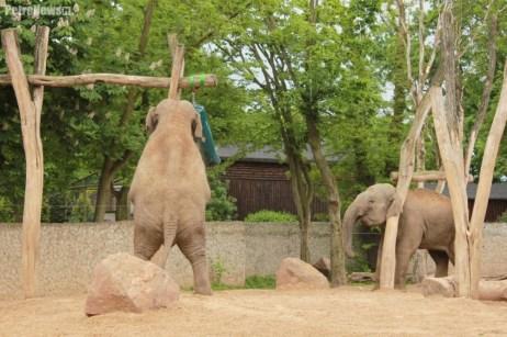 Słonie ZOO (3)