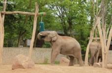 Słonie ZOO (4)