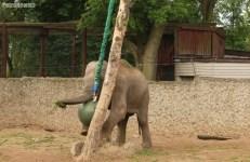 Słonie ZOO (6)