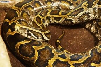 Węże (14)