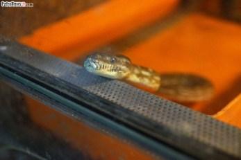 Węże (16)
