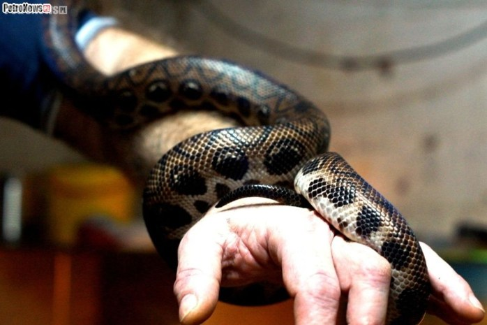 Węże (2)